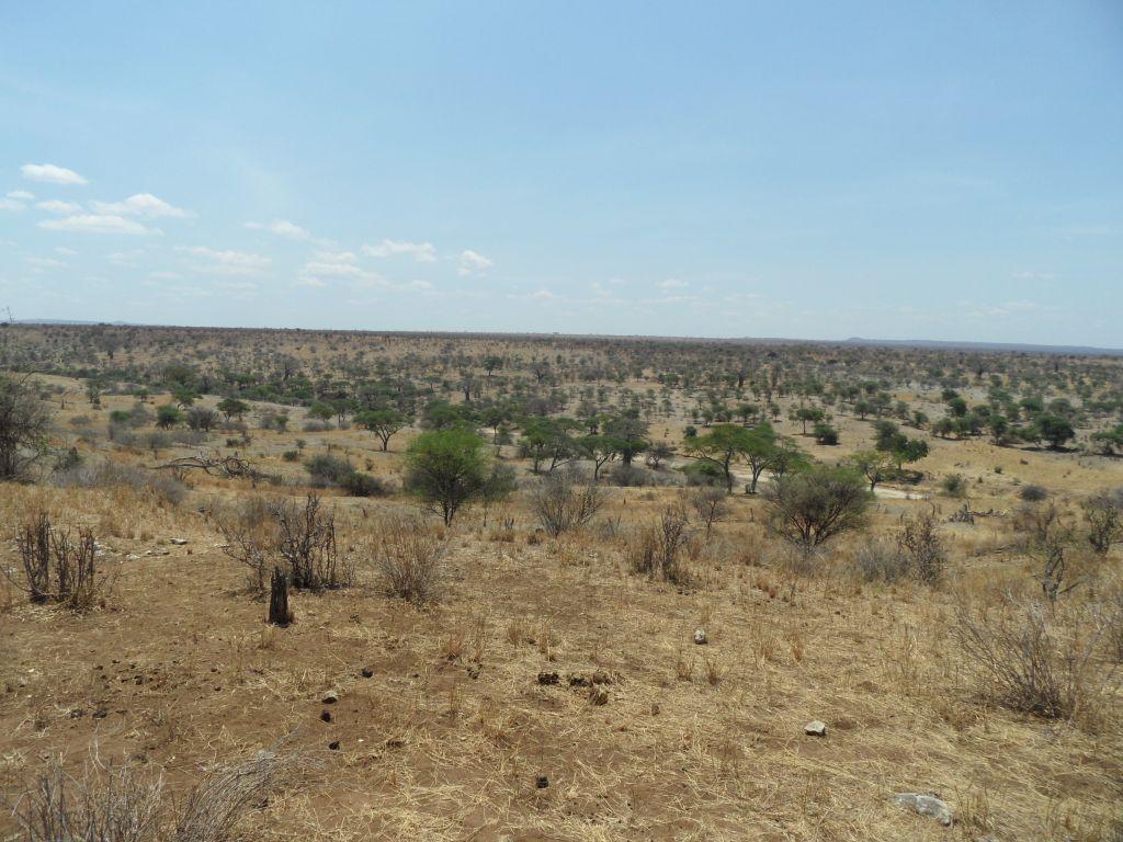 Tarangire Milli Parkı Genel Görünümü