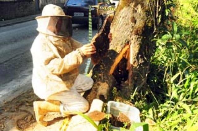 RN: Bombeiros registram aumento em ocorrências com abelhas