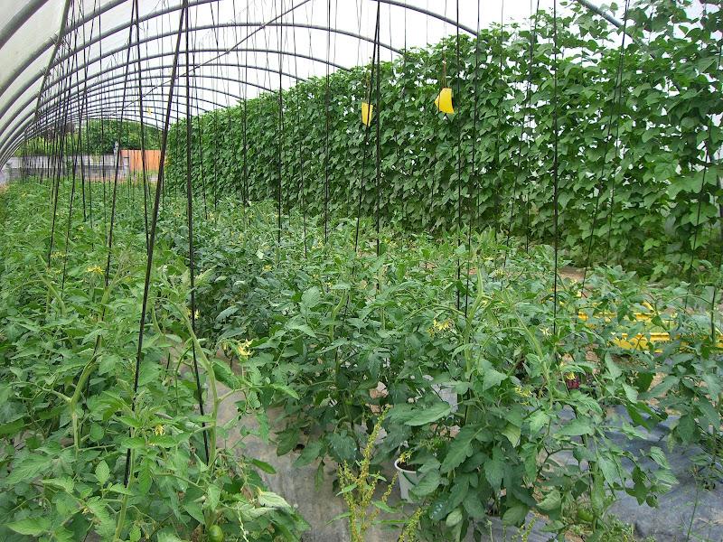 invernadoiro a horta do sacho
