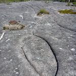 Aboriginal Rock Engraving close to West Head Rd.   (304056)
