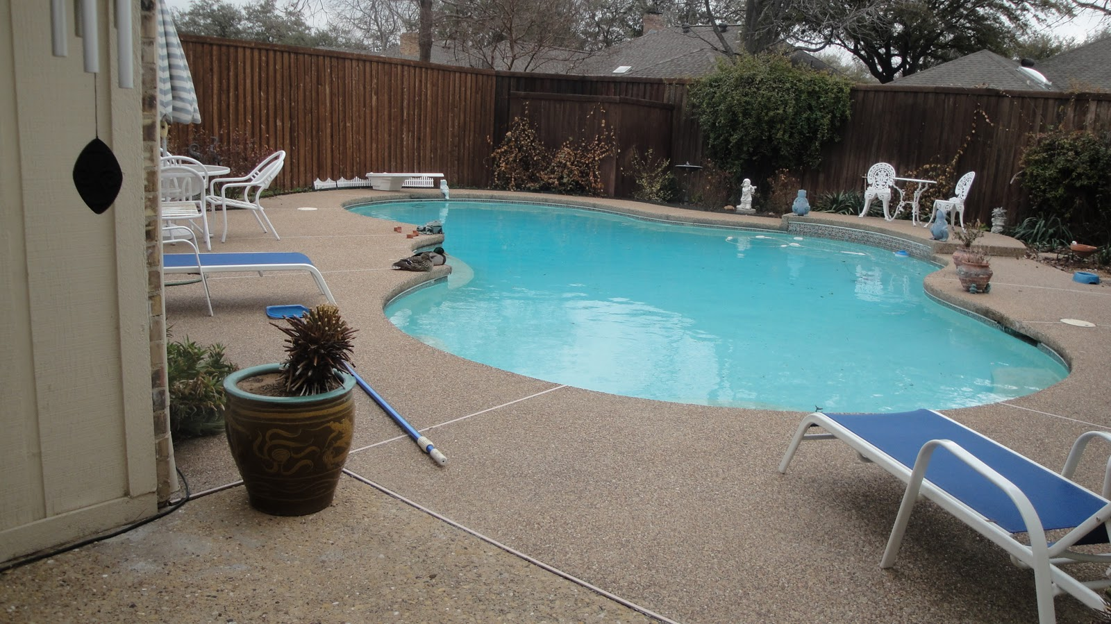 ducks in my pool and other stories march 2011. Black Bedroom Furniture Sets. Home Design Ideas