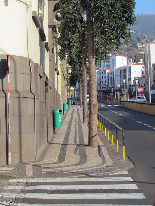 trees in 5 de Outubro street