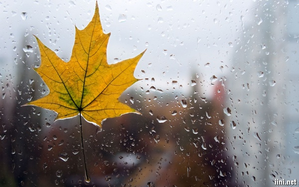 tải ảnh mưa mùa thu