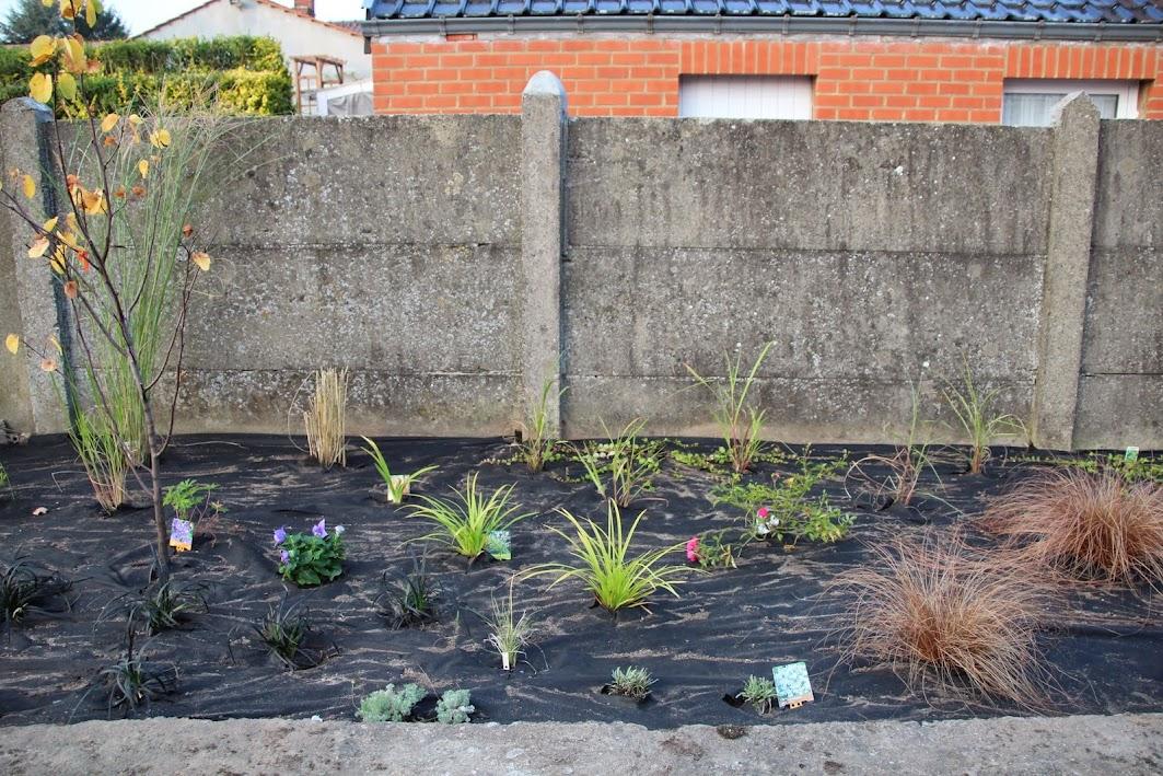 Nouvelle maison dit aussi nouveau jardin... IMG_9527