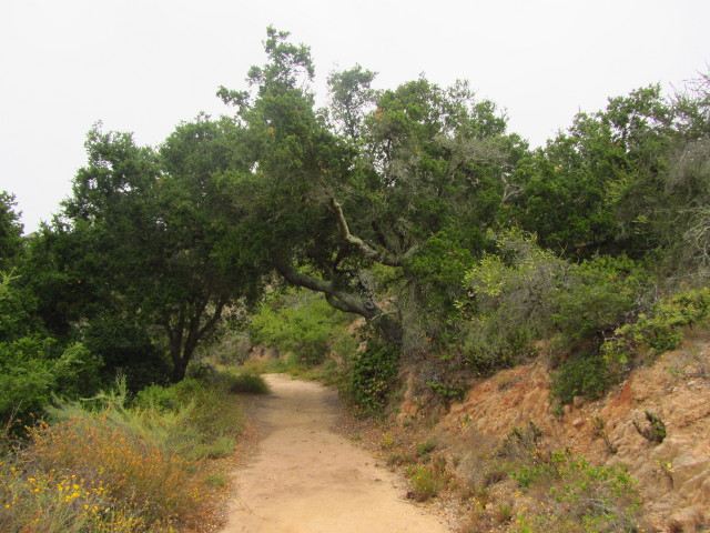 a bit of the trail with an overhanging oak