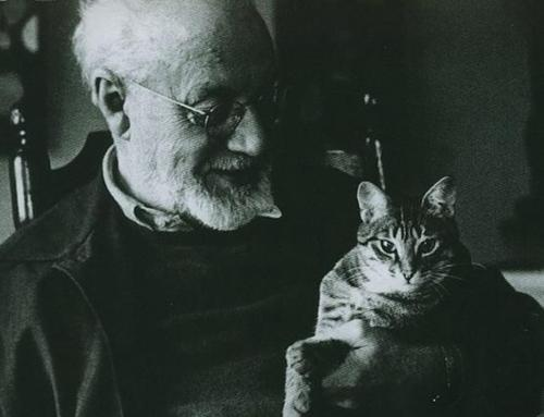 Henri Matisse and a cat closeup