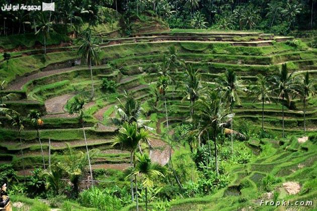 أندونيسيا بلد الجمال الخلاب  Indonesia_05