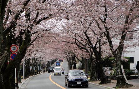 Kinh nghiệm sống tại Nhật của các thực tập sinh