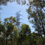 View of power lines from Casuarina Track (131785)