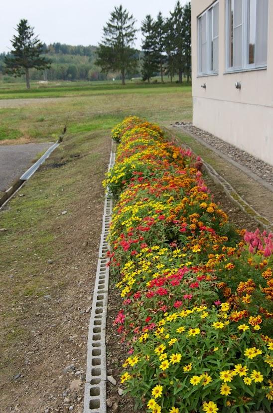 会館を彩る花