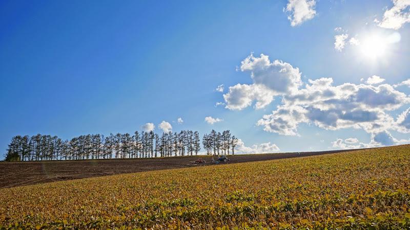 美瑛 マイルドセブンの丘 写真3
