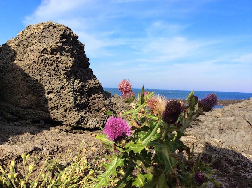 비앙도에서 바위사이에 핀 꽃