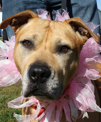 Ester at Animal House Shelter awaits her forever home