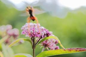 Banzai Wasp