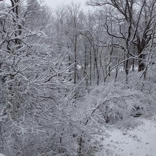 Maggie Grimm