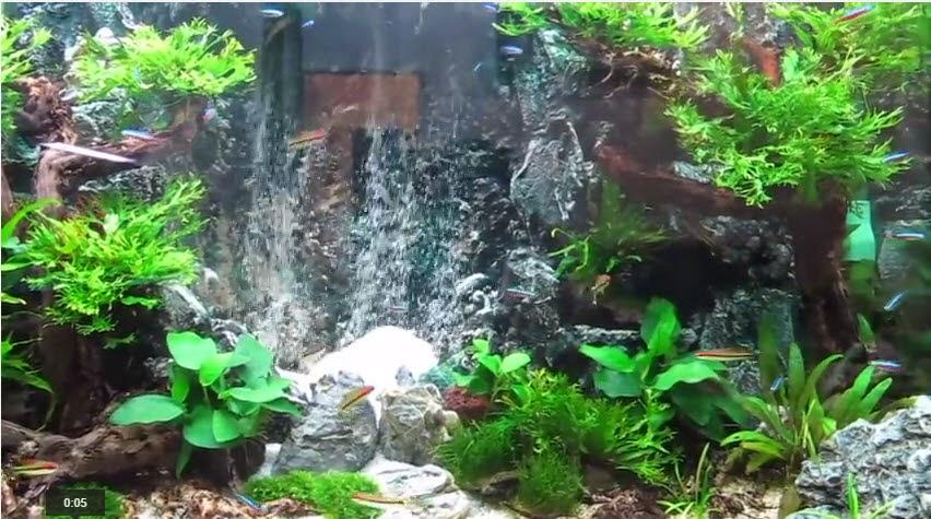 Tạp hóa thủy sinh - tham khảo các hồ thủy sinh suối thác khác