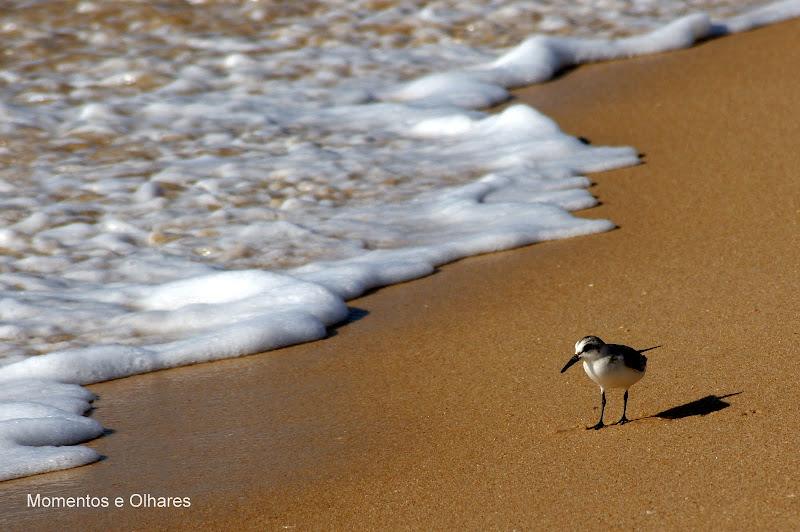 Ave à Beira mar, Praia do Carvalhal