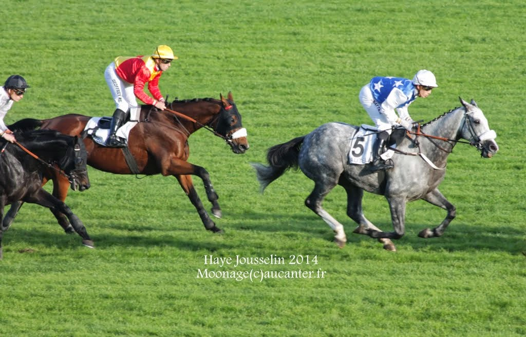 Photos Auteuil 2-11-2014 (48h de l'obstacle) IMG_5632