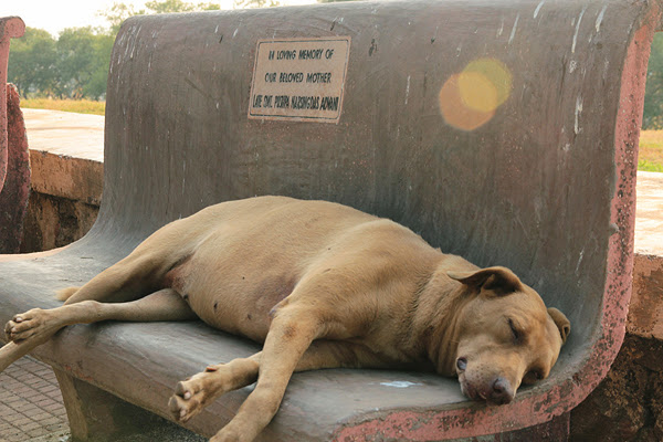 essay on problem of stray dogs