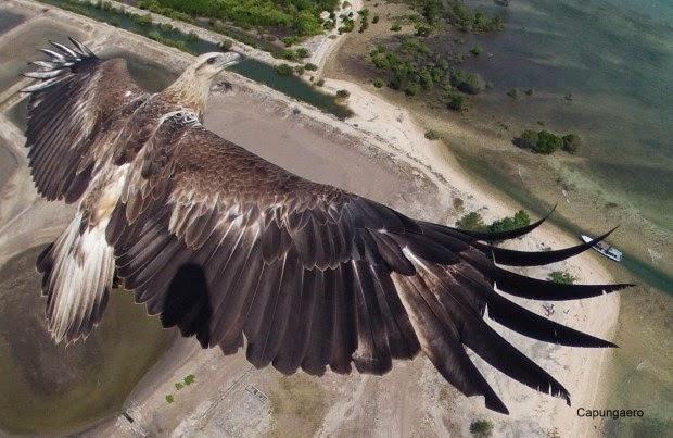 18 bức ảnh chụp bằng Drone tuyệt vời nhất năm 2014 - 56199
