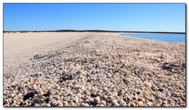 Ракушка с побережья как память о море и лете
