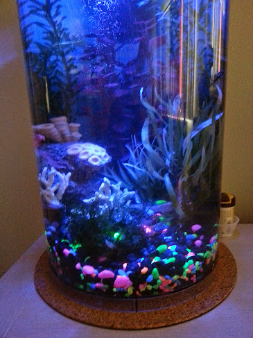 6g planted 360 round and tall the planted tank forum for Circular fish tank