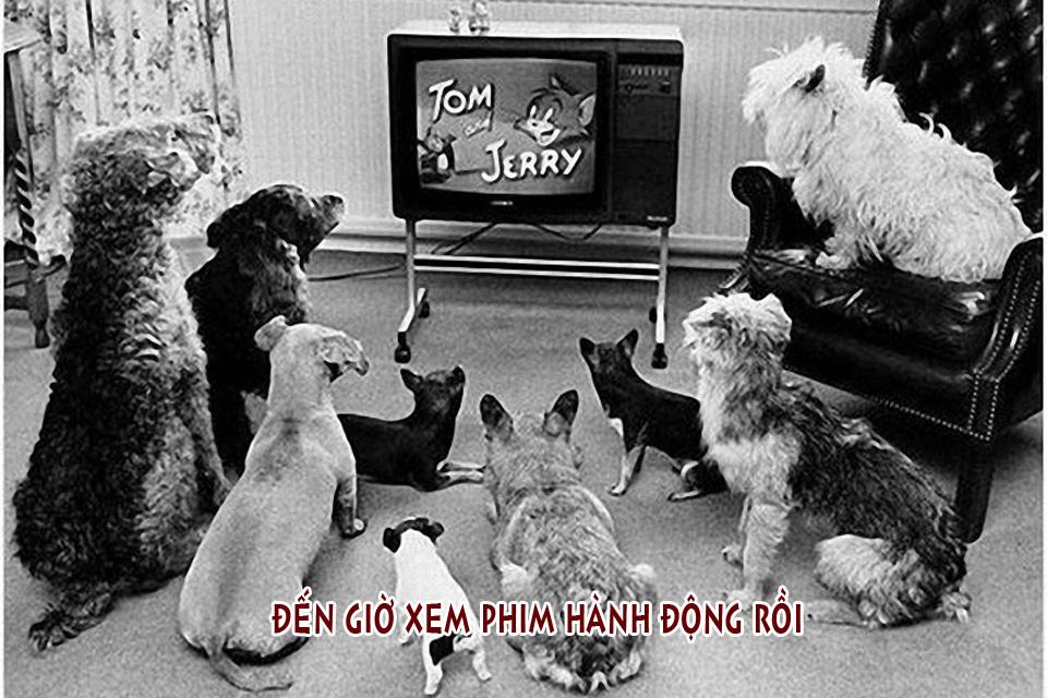 Ảnh chế chú chó xem TV