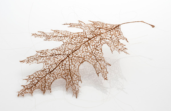 Tree Leaves Made Of Stitched And Knotted Human Hair,tree leaves,tree leaves human hair,human hair leaves,leaves human hair,tree leaves human hairs