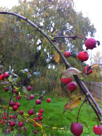 Gallery-Nature-Autumn-Berries-Cobwebs