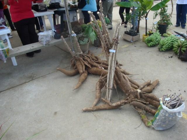 CISAM EXPUSO PLANTACIONES Y PLATOS TÍPICOS EN LA PRIMERA FERIA DE SOBERANÍA ALIMENTARIA