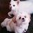 Princessgeegee avatar image