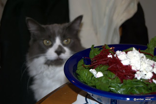 cat wants salad