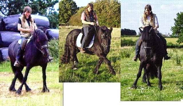 Clicking with Classical Dressage