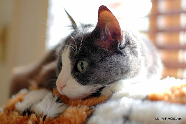 Manya The Cat