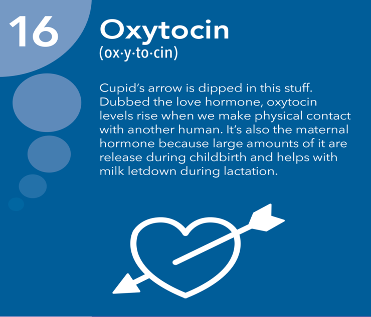 Image result for Oxytocin