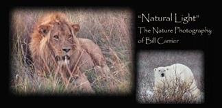 Natural Light: The Nature Photography of Bill Carrier