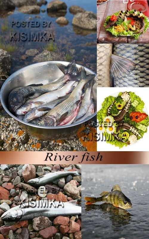 Stock Photo: River fish