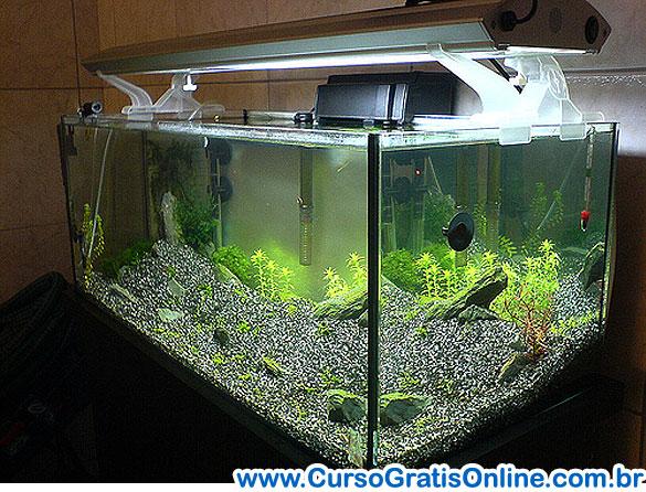 Plantas Aquáticas no Aquário