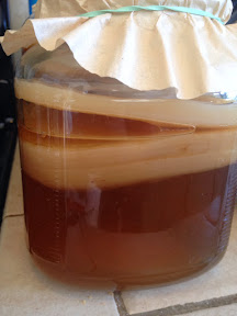 Kombucha in jar with scoby