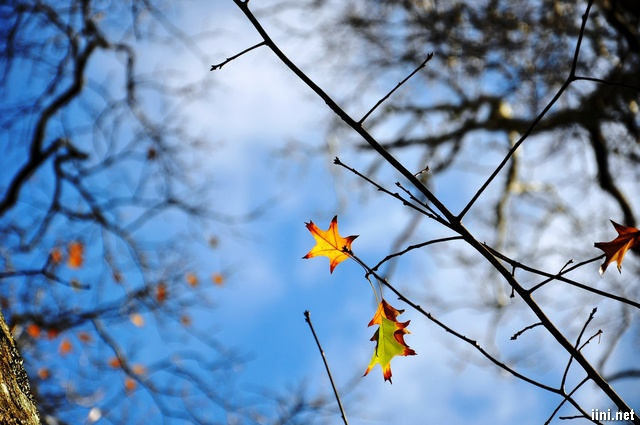 những chiếc lá mùa Thu cuối cùng
