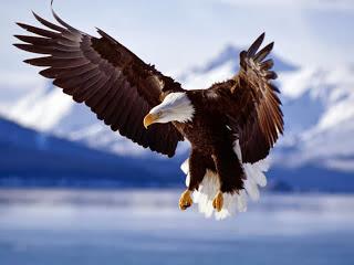 La Renovacion del Águila, Una gran historia de lucha y superación