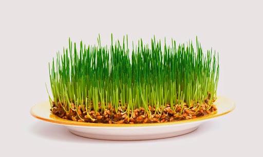 Как сажать семена?