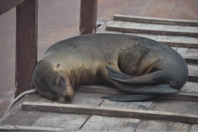 isabela day trip galapagos island