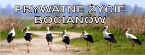 Spotkanie autorskie Krystyny Szymańskiej z młodzieżą PG w Zwoleniu