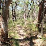 Walking along the ridge (248542)