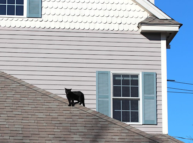 a black cat on a roof meowing at the camera