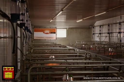 Open dag varkensbedrijf molenpas overloon 29-06-2013 (12).JPG
