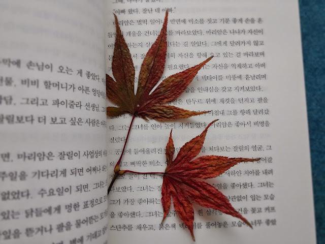 책 갈피에 끼워 말린 나뭇잎