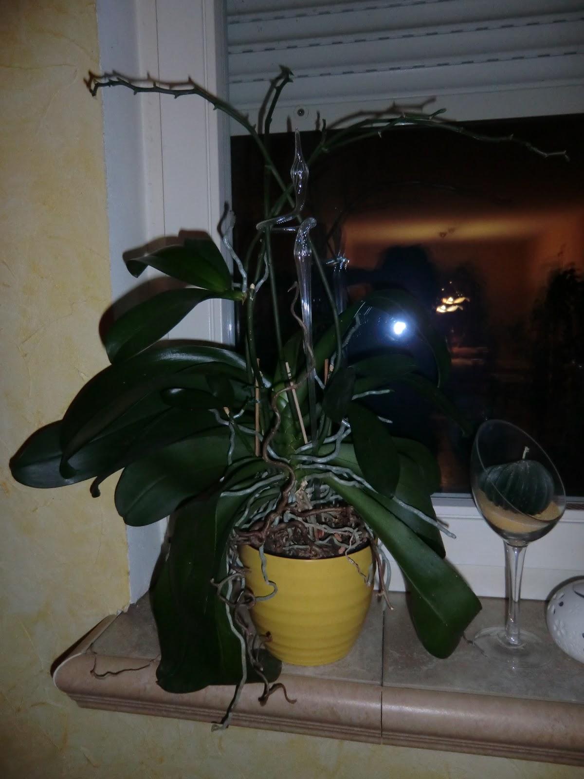 mama muetze s produkttest blog seramis spezialsubstrat f r orchideen. Black Bedroom Furniture Sets. Home Design Ideas