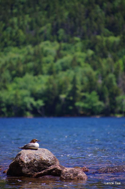 美國緬因州阿卡迪亞國家公園 Acadia National Park & 巴爾港 Bar Harbor